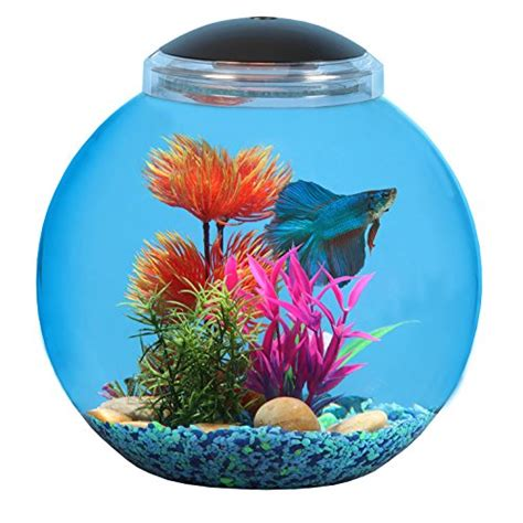 Do Betta Fish Need Light by 3 Gallon Api Aquarium For Betta Fish All About Betta