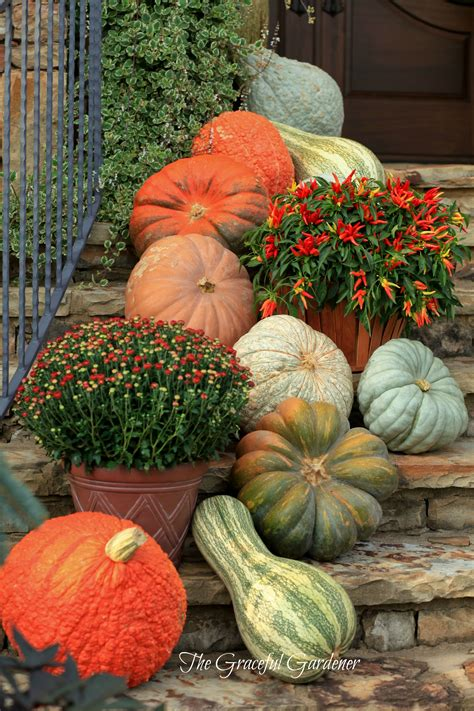 decorating pumpkins for fall the graceful gardener 187 decorating with pumpkins