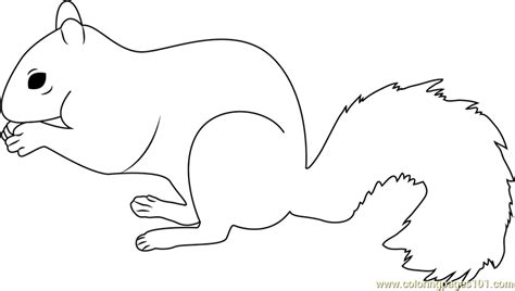 coloring page of a gray squirrel grey squirrel coloring page free squirrel coloring pages