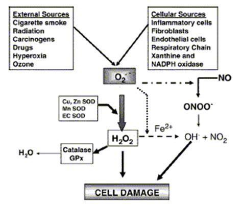 Cellar Antioxidant Defense And Detoxication System In The by Glisodin Monograph Glisodin Org