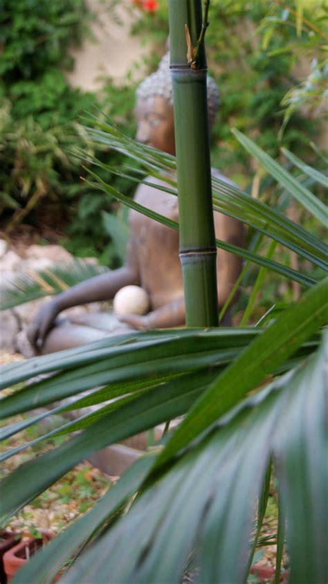bambusarten für den garten 58 bambus kaufen bambuspflanzen als sichtschutz