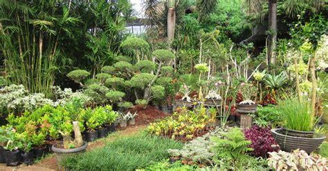 jual tanaman hias murah sedia berbagai macam tanaman hias