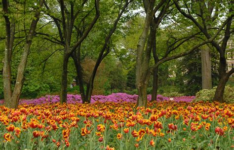 Garden Baltimore blooms at sherwood gardens through the years