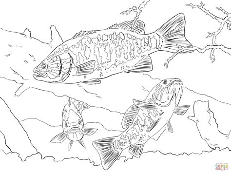 bass fish coloring pages free largemouth bass coloring page coloring pages
