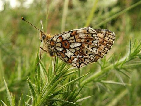 butterflies p3