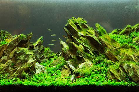 aquascaping  tank  beauty