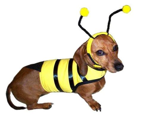 a bee puppies bumble bee big costume bumble bee costume for large dogs