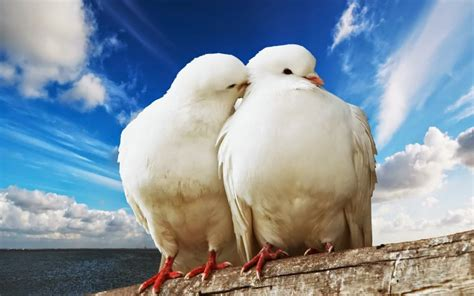 son los animales ms infieles a su pareja que nosotros taringa imagenes de parejas de animales