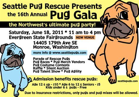 pugs in seattle seattle pug rescue 2012 pug galaseattle pug n brewpugs chugspug rescue of florida