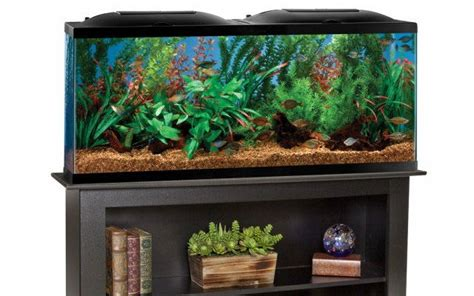 top 28 55 gallon tank dimensions 55 gallon fish tank flickr photo sharing 55 gallon fish