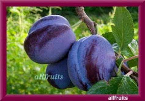 a fruit that starts with the letter d fruits name starts with the letter quot d quot fruits in the world