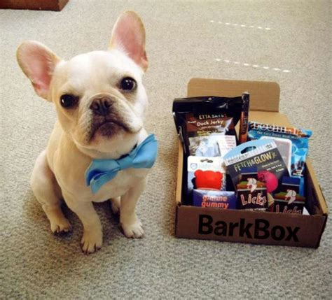 gifts for dogs gifts for dogs barkbox subscription boxes cheap is the new