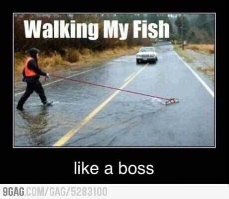 Like A Boss Meme - like a boss meme by rutgerbeelen memedroid