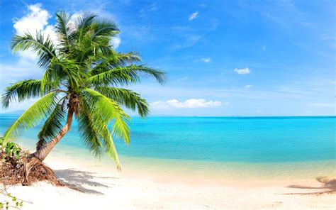 Live Palm Tree Wallpaper by Palm Leaf Wallpaper Beaches Nature 87 Wallpapers 3d