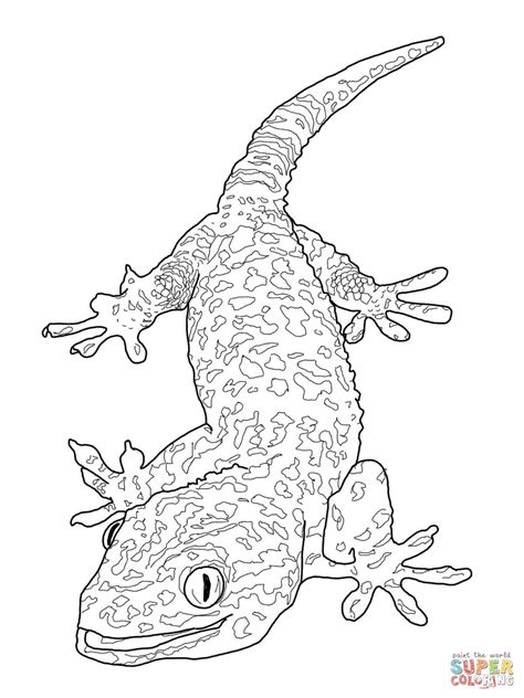 cute gecko coloring pages tokay gecko coloring page free printable coloring pages