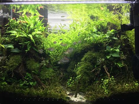 forest aquascape 17 best images about nature aquascapes on pinterest