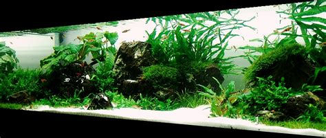 aquascape setup bubbles aquarium aquascapes tank setups projects