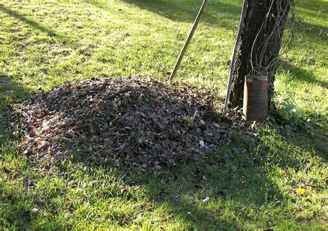 Pilze Im Garten Dauerhaft Entfernen by Unkraut Auf Dem Rasen Unkraut Auf Dem Rasen Garten