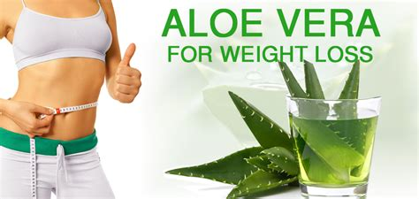 Aloe Vera For Detox And Weight Loss by Aloe Vera For Weight Loss Some Untold Facts
