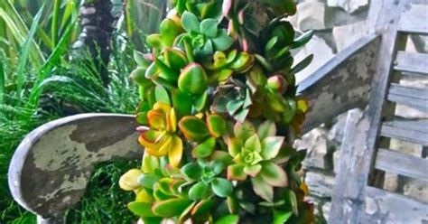 how to dismantle a christmas tree succulent tree how is that just use a foam cone and pin them in dismantle and