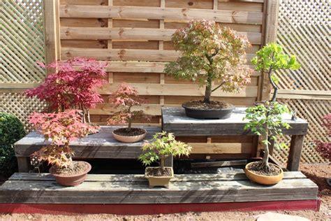jardin japonais bonsai accueil design et mobilier