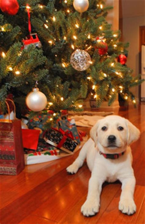 holiday safety tips for dogs doghealth com