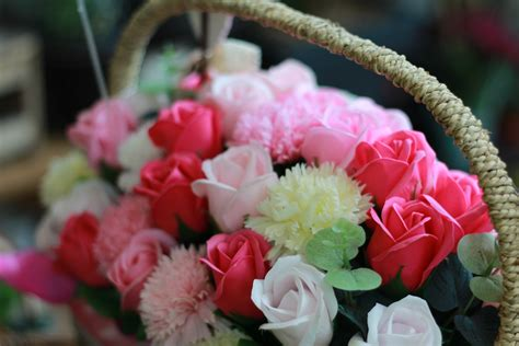 gambar menanam daun bunga berwarna merah muda anyelir budidaya bunga selamat dianthus
