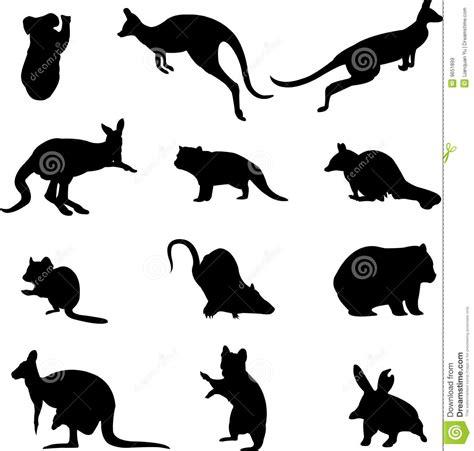 imagenes libres animales animales marsupiales australianos im 225 genes de archivo