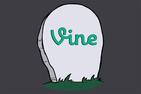 Vine Email Search Vine Shuts Panther Print