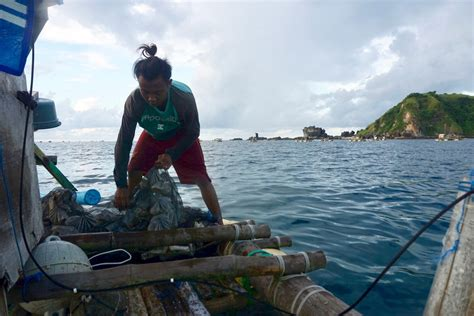 Bibit Lobster fokus liputan larangan penangkapan lobster permen pahit bagi nelayan lombok bagian 2