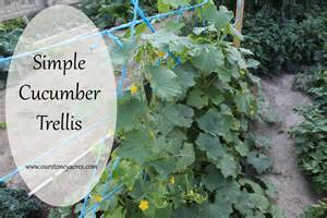 how to grow cucumbers on a trellis diy friday simple cucumber trellis stoney acres