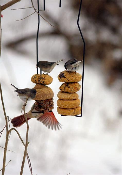suet feeder diy diy suet cakes therapy cakes birds and