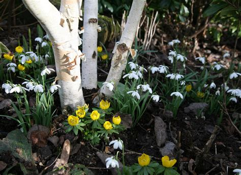free wallpaper early spring early spring free wallpaper wallpapersafari