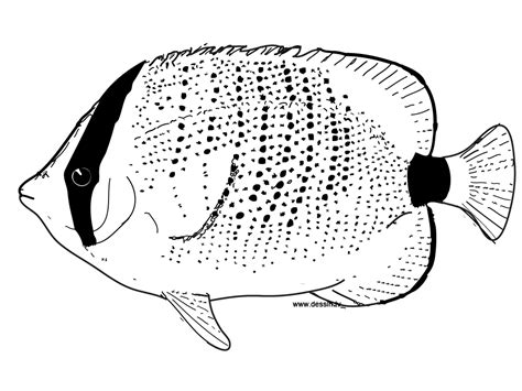 Mots Clefs Animals Fish Pacific Ocean Reef sketch template