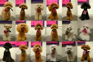different styles of hair cuts for poodles dog grooming kentucky see spot grooming