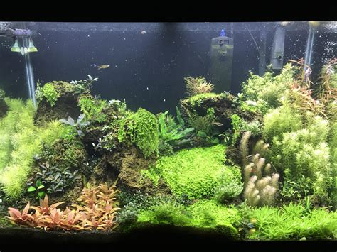 aquascape reddit my 65 gallon aquascape because who doesn t like an