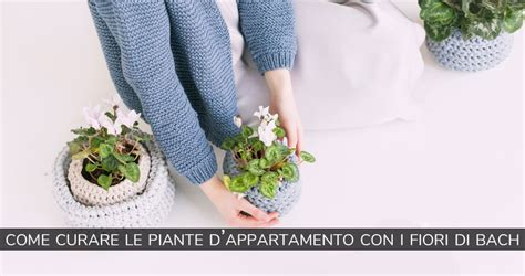 piante d appartamento con fiori come curare le piante d appartamento con i fiori di bach