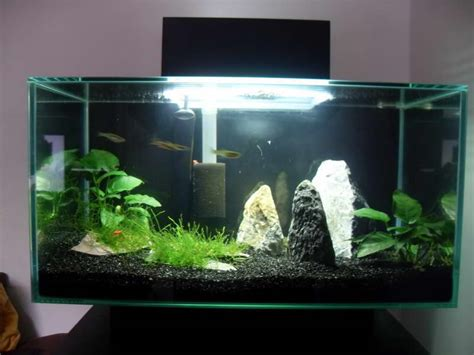 Decorating Ideas For Fish Tank Indoor D 233 Cor Ideas For Aquarium L With Lighting Ideas