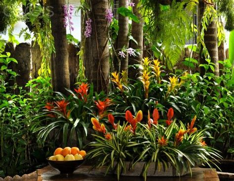 Garten Tropisch Gestalten by Best 25 Tropical Garden Design Ideas On
