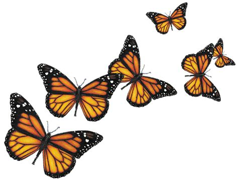 Home Design 3d Gold For Free by Orange Butterfly Png
