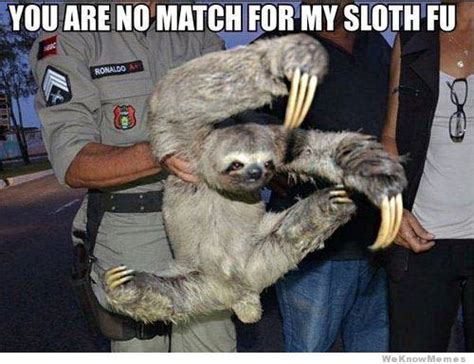 Sloth Meme Pictures - funny conservative memes sloth memes sloth and meme