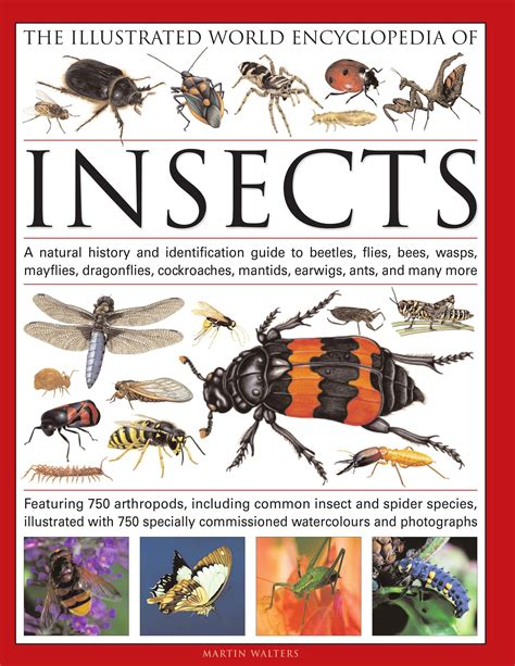 Bug Encyclopedia Dk Smithsonian Ebook E Book insect books for children