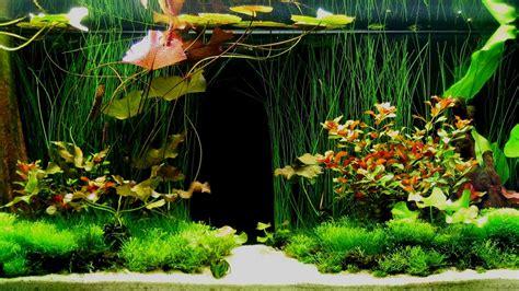design your own aquarium background aquarium wallpaper hd fond ecran hd