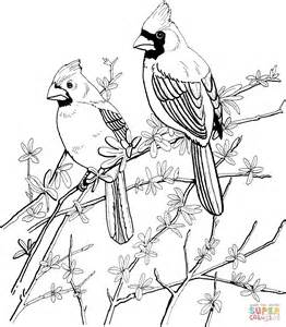cardinal coloring page two cardinals coloring coloring