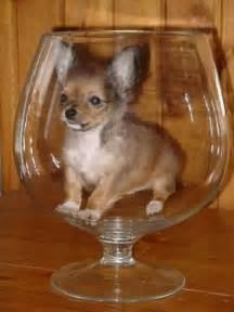 фото маленьких щенков кане корсо