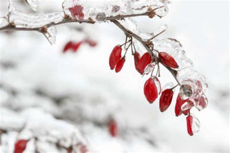 garten ideen winter den garten auch im winter nutzen 5 ideen wohnungs
