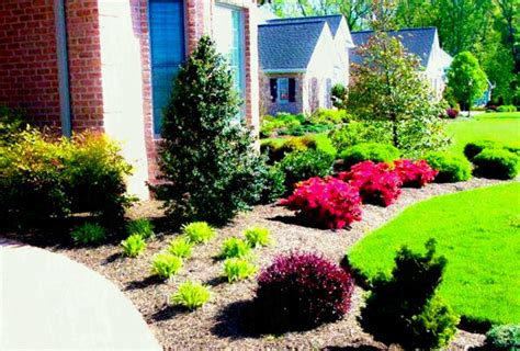 decorative yard plants green modern front yard landscaping for country home