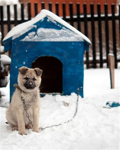 How To Heat A Dog House During Winter Slomin S Home Security Blog