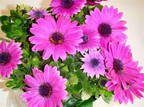 Comment Aménager Balcon by Scenery Pictures Fleurs De Printemps Pour Jardiniere