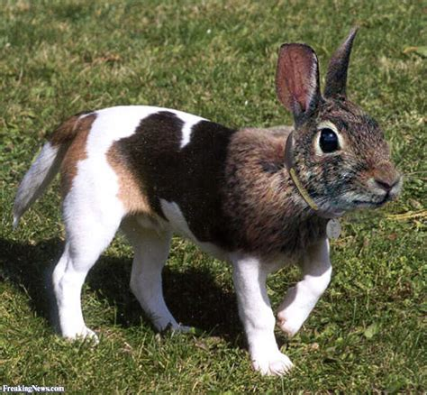 rabbit dogs rabbit pictures freaking news